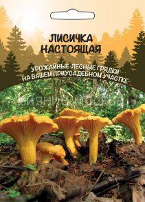 Лисичка Настоящая (Уральский Дачник)