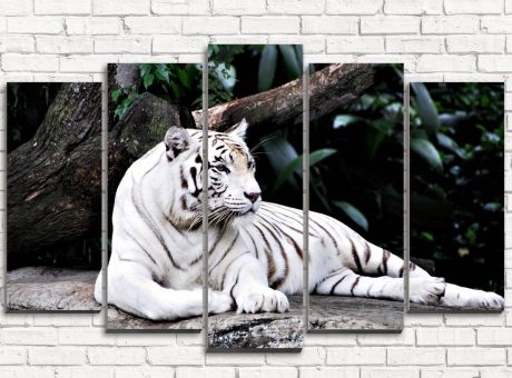 Модульная картина Белый тигр