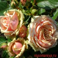 Эден Романтика (Eden Romantica)