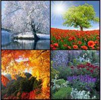Цветотипы. Как найти и полюбить цвета своей внешности (Сабира Арефкина)
