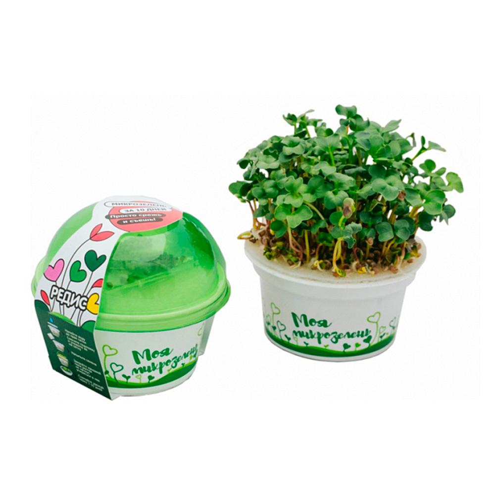 Набор для выращивания «Моя микрозелень» Редис