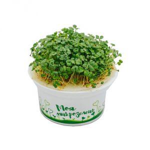 Набор для выращивания Моя микрозелень Рукола