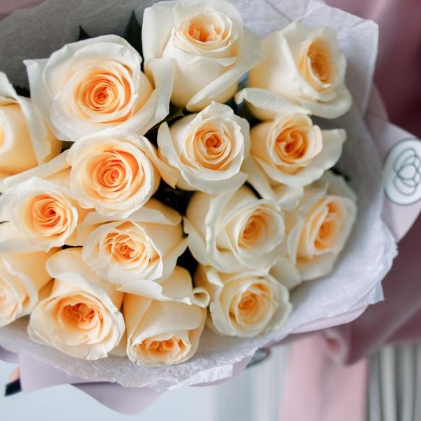 15 кремовых роз 60 см в красивой упаковке