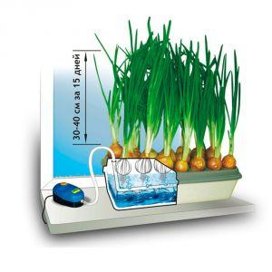 Домашняя гидропонная установка  «Луковое счастье»