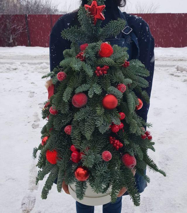 Новогодняя живая ёлочка