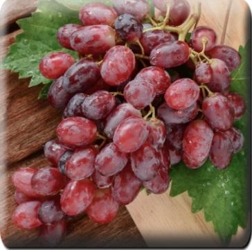 Виноград Тайфун