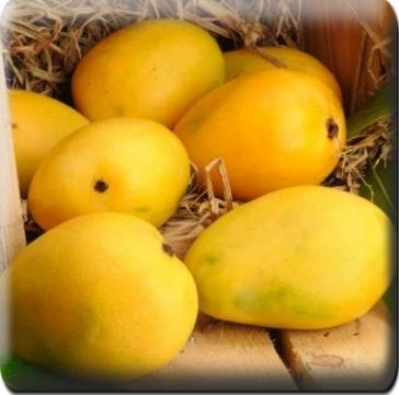 Манго желтое Вьетнам