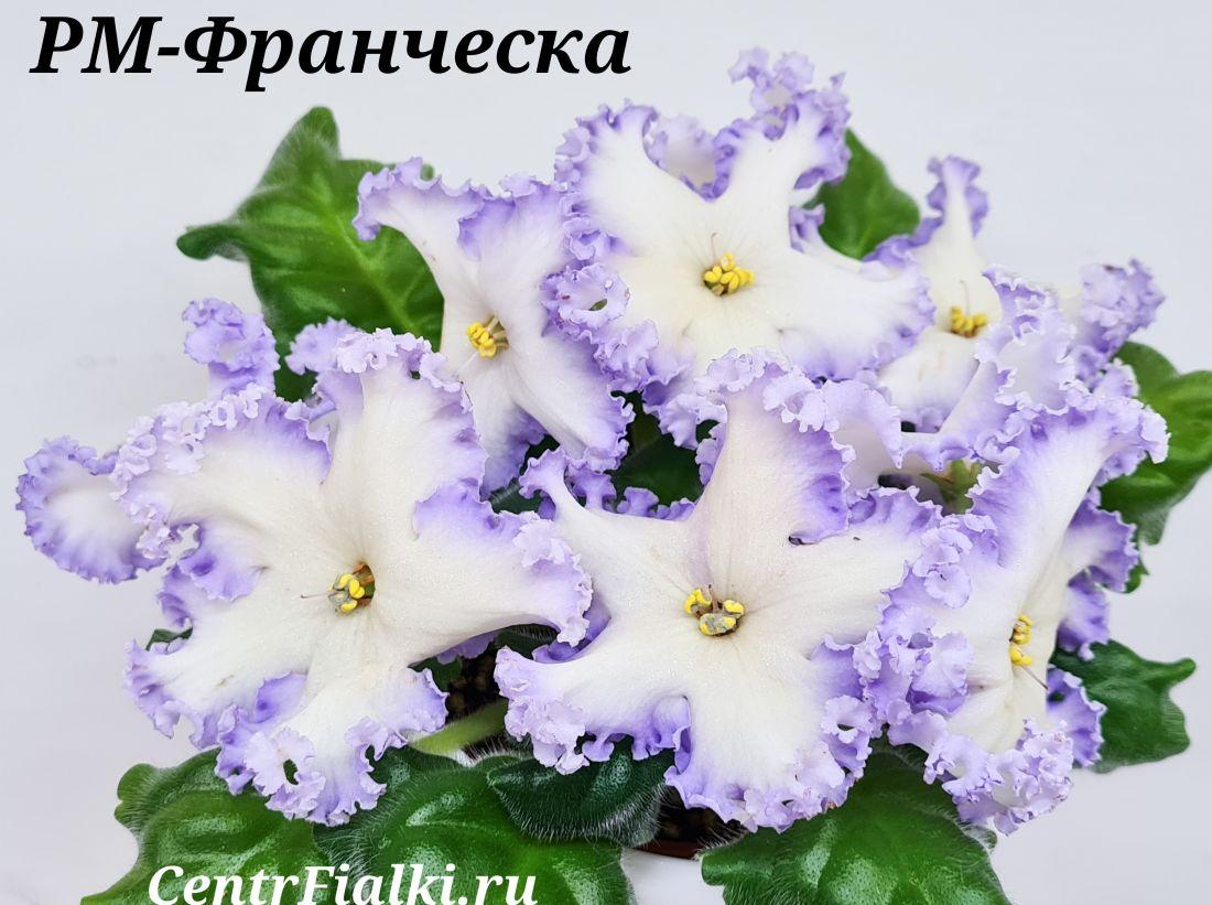РМ-Франческа  (Н.Скорнякова)