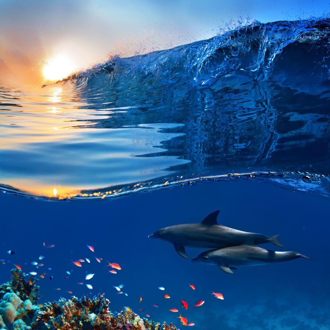 Подводный мир 9-062