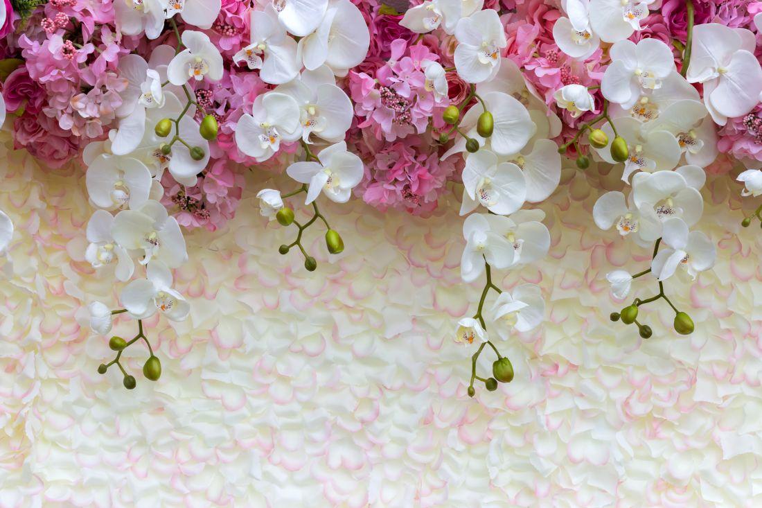 Орхидеи 6-129