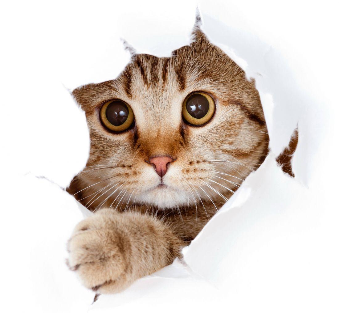 Котёнок 3-002