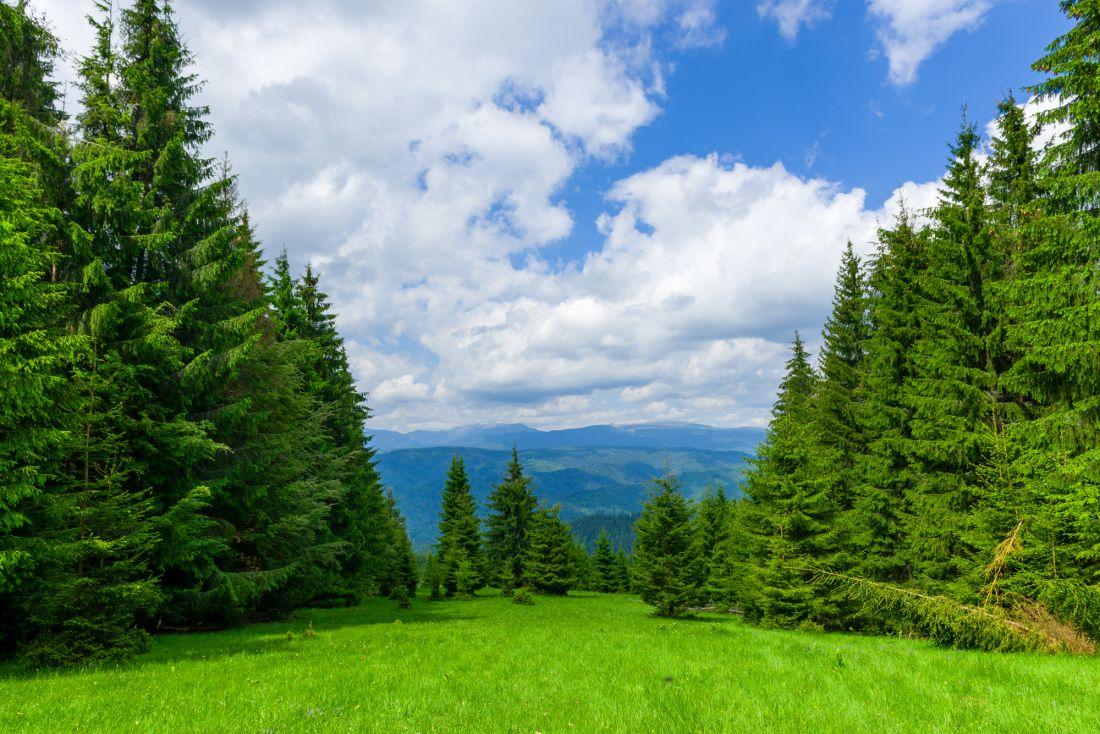 Зеленая поляна 10-242