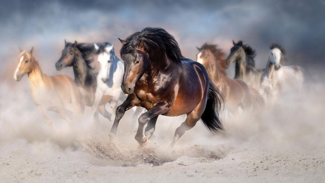 Бегущие лошади 3-163
