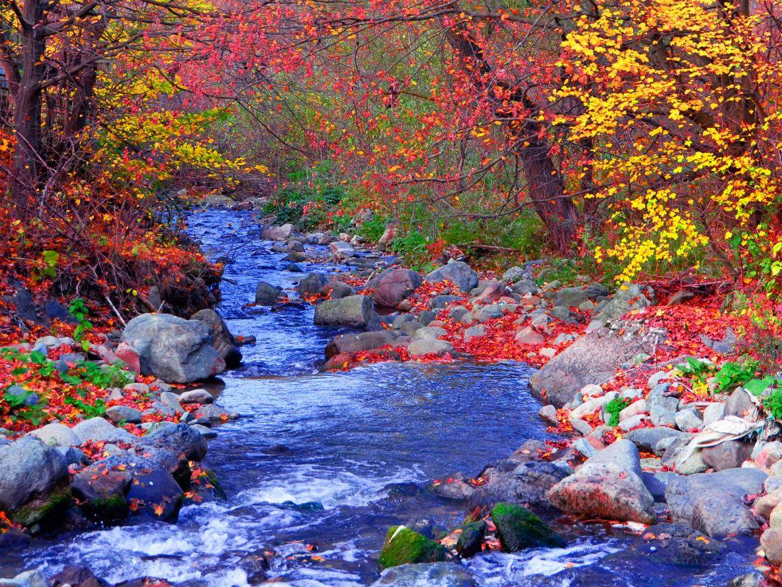 Речка в осеннем лесу 10-278