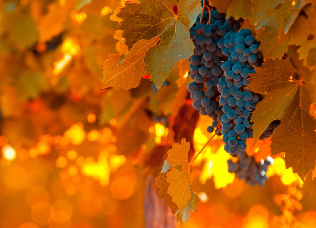 Гроздь винограда 1023