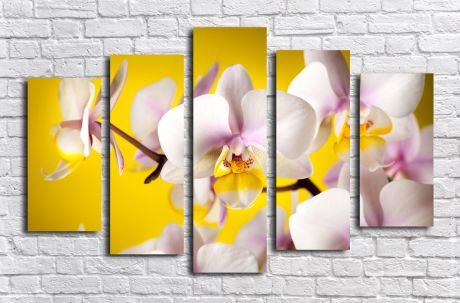 Модульная картина Орхидеи на желтом фоне