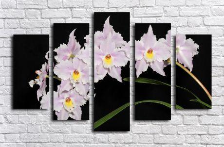 Модульная картина Ветвь орхидеи на черном фоне