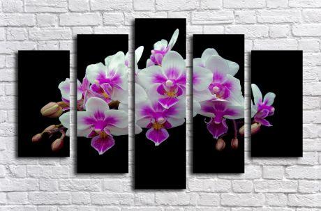 Модульная картина Орхидея на черном фоне