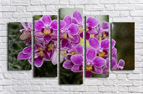 Модульная картина Цветы фирлетовой орхидеи