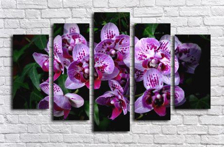 Модульная картина Фаленопсис фиолетовый