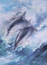 Postcard Dolphins