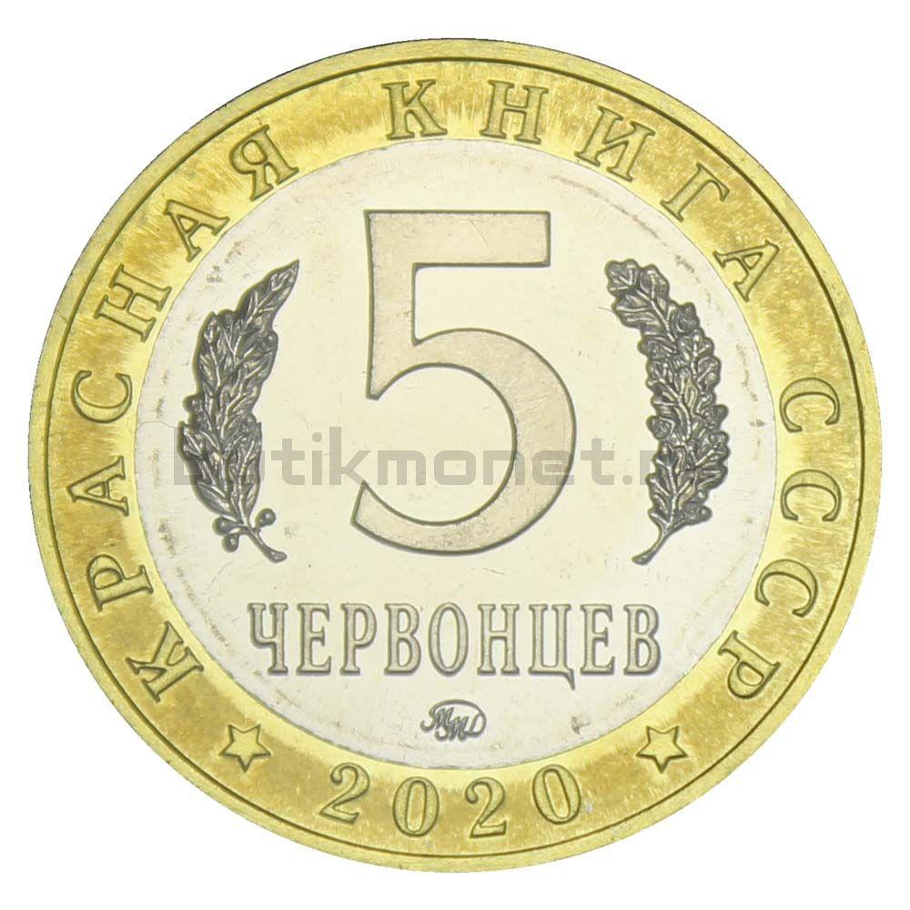 Россия Монетовидный жетон 5 червонцев 2020 ММД Подкаменщик Обыкновенный (Красная Книга)