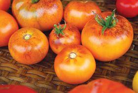 Томат Оранжевый с фиолетовыми пятнами
