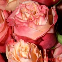 Лавли Хартс (Lovely Hearts)