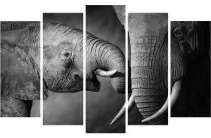 Модульная картина Слоновья нежность