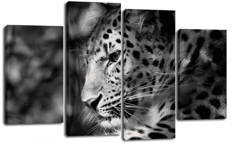 Модульная картина Взгляд ягуара