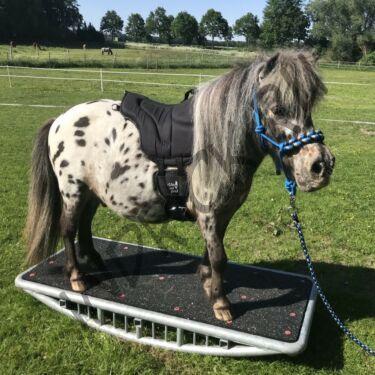 Пад для пони Barefoot Ride-on-Pad Pony с подпругой
