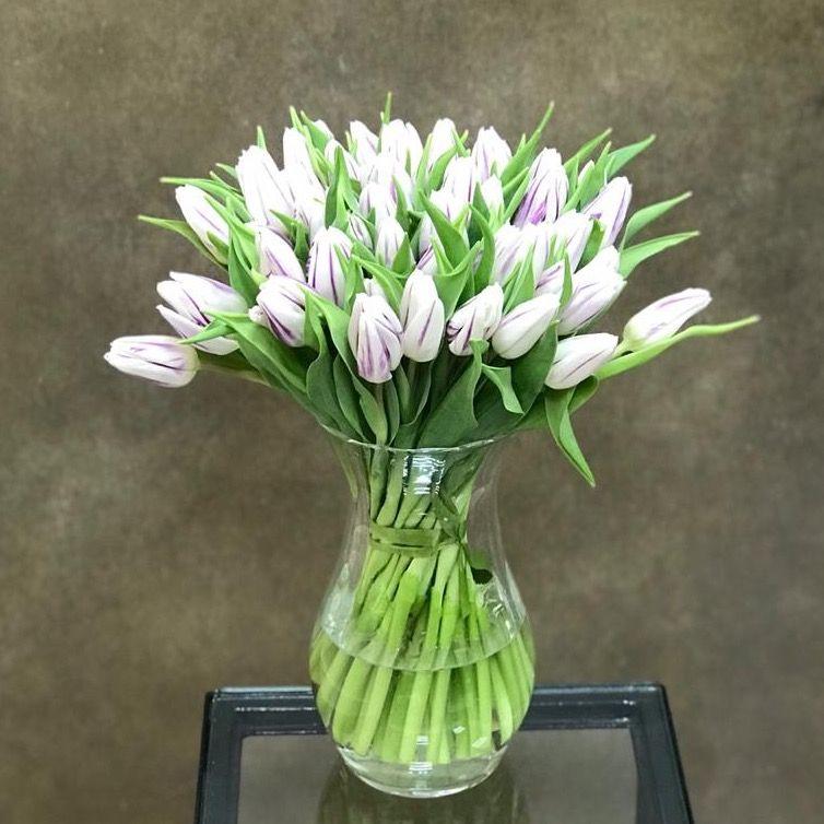 Тюльпаны бело-фиолетовые