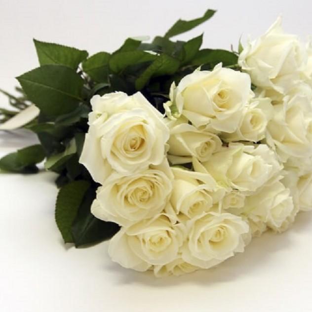 Розы белые от 9 шт. (высокая 70 см)